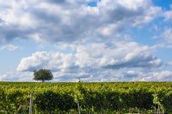 Vineyard and sky horizon Royalty Free Stock Photography