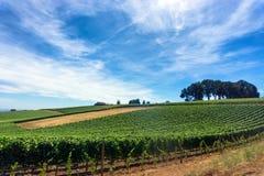 Vineyard and Sky Stock Photos