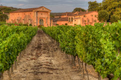 Vineyard and a small farm in Provence during sunset Stock Photo