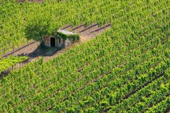Vineyard with a small farmhouse in Montalcino, Val d`Orcia, Tusc. Any, Italy. Montalcino is famous for its Brunello di Montalcino wine stock images
