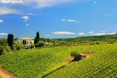 Vineyard with a small farmhouse in Montalcino, Val d`Orcia, Tusc. Any, Italy. Montalcino is famous for its Brunello di Montalcino wine stock image