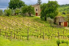Vineyard with a small farmhouse in Montalcino, Val d`Orcia, Tusc. Any, Italy. Montalcino is famous for its Brunello di Montalcino wine royalty free stock photos