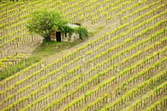 Vineyard with a small farmhouse in Montalcino, Val d`Orcia, Tusc Royalty Free Stock Photo