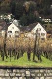 Vineyard. And small houses seen in Vaduz, Liechtenstein Stock Image