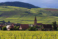 VINEYARD AND SMALL VILLAGE IN ALSACE - FRANCE. VINEYARD all around a village in Alscage region in france stock photo