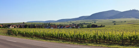 Vineyard and small village in Alsace - France. Panorama of a vine in France in front of a village and mountains royalty free stock images