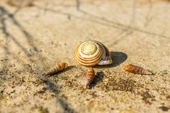 Vineyard snail house empty on a wall in summer stock photos