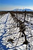 Vineyard in snow. In the Golan Heights, Israel Stock Images