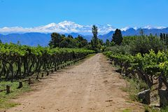 Vineyard with Snow Capped Mountains stock photo