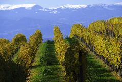 Vineyard snow mountain Stock Photo