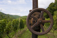 Vineyard Sobes. In Czech Republic Royalty Free Stock Image
