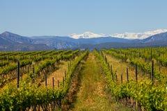 Vineyard in Somontano Stock Photography