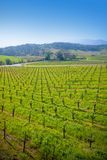 Vineyard in Sonoma, California. Stock Photos