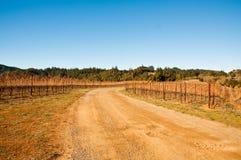 Vineyard. In Sonoma County, California Stock Image