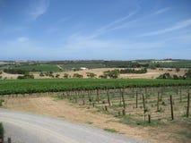 Vineyard in South Australia. A vineyard in McLaren Vale, South Australia royalty free stock photo