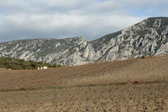 Vineyard in south of France Royalty Free Stock Photography