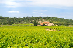 Vineyard in south-France Royalty Free Stock Photography