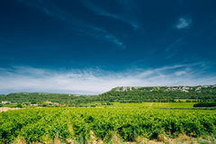 Vineyard of the South of France. Sunny summer day Royalty Free Stock Images