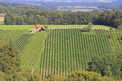 Vineyard. In South-Styria, Austria Royalty Free Stock Photography
