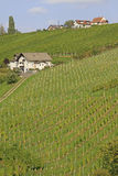 Vineyard. In South-Styria, Austria Stock Photos