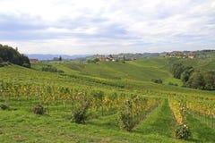 Vineyard. In South-Styria, Austria Royalty Free Stock Image