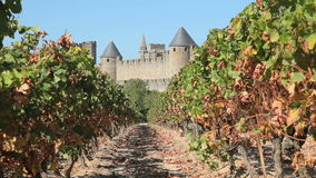 Vineyard in southern France stock video