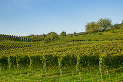 Vineyard southern germany, mountain road, heppenheim, bensheim. Vineyard southern germany, mountain road, between Heppenheim and bensheim Royalty Free Stock Images