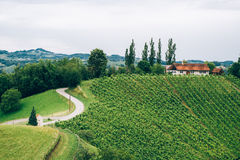 Vineyard in Southern Styria. With typical Farmhouse royalty free stock photography