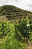 Vineyard in Southwest Germany Rhineland Royalty Free Stock Photo