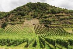 Vineyard in Southwest Germany Rhineland Stock Photography