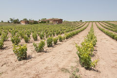 Vineyard in spain. Image of a vineyard and wine plants hill in La Rioja, Spain stock image