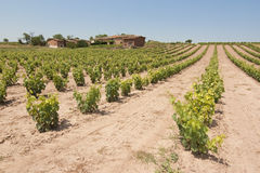 Vineyard in spain. Image of a vineyard and wine plants hill in La Rioja, Spain Stock Images