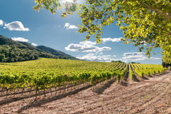 Vineyard, Spain. Vineyard near the hills on clear day, Spain stock images