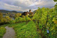 Vineyard and Spiez Castle Royalty Free Stock Images