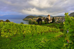Vineyard at Spiez in Switzerland. A vineyard at Spiez in Switzerland Royalty Free Stock Image