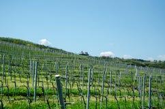 The vineyard Royalty Free Stock Photo