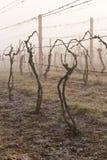 Vineyard in spring Royalty Free Stock Photos