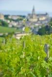 Vineyard at Sring and village of Saint-Emilion Stock Photos