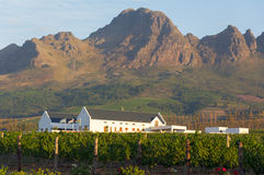 Vineyard at Stellenbosch winery with mountains Stock Photo