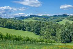 Vineyard in Styria,Austria Royalty Free Stock Photo