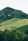 Vineyard in Styria vertical view Stock Images