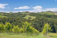 Vineyard,styrian Tuscany,Austria Royalty Free Stock Image