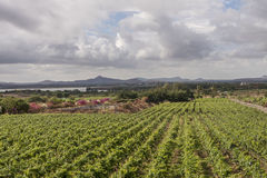 Vineyard. Sula Vineyards is an Indian winery stock photography