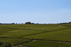 Vineyard. On a summer day royalty free stock photos