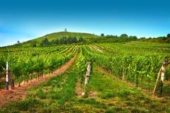Vineyard in summer day stock photos