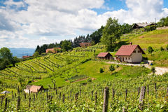 vineyard in summer with house and blue sky Royalty Free Stock Image