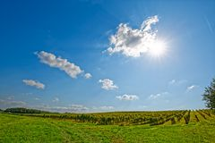 Vineyard at sunny day. View of the vineyards in Kutjevo Croatia at sunny day stock photos