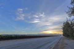 Vineyard at Sunrise. Ausenkenr, Namibia stock photography