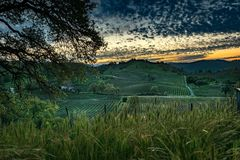 Vineyard at Sunrise. Sunrise with clouds over a vineyard in California royalty free stock photos