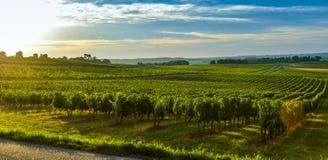 Vineyard Sunrise - Landscape-Bordeaux Vineyard. Vineyard Sunrise Bordeaux Vineyard France Aquitaine Gironde 33 stock images